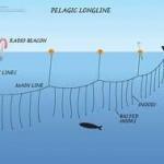 El método de pesca con palangre utiliza miles de anzuelos que arrasan con la fauna marina.