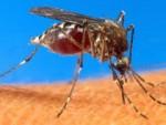 chikungunya 2