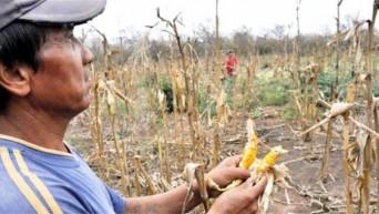 Guatemala es el país más afectado por la sequía y le sigue