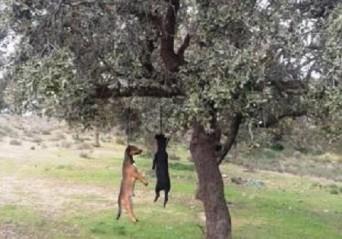 perros colgados