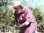 Fidel Castro cuando se dedicaba a investigar sobre las propiedades de la moringa o marango.