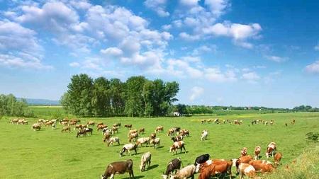 vacas bienestar